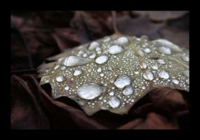 The Water Leaf picture. by Nagame