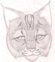 Kitteh Head.. by Baka-Neko-Ninja