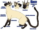 Kace Reference Sheet by kcravenyote