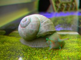 Snail 3D Anaglyph by yellowishhaze