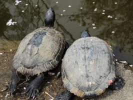 Turtles 3 by thecomingwinter