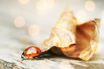 Bokeh Ladybug. by wijnoogst