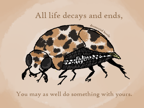 motivational nihilistic bugs - dermestid beetle by requinamour