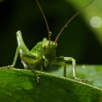 Grasshopper X2 by AndyGS