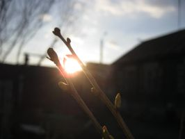 Twigs caught the sun by goodmixer
