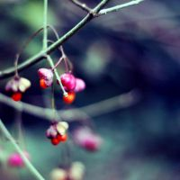 berry bokeh by lucretiaxx