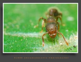 ant3 by dhead