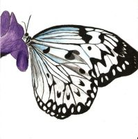 Butterfly Project 2: Color by Astralstonekeeper