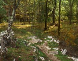 Autumn Forest Path by Ravenhart