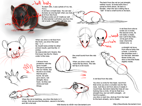 Rat Tutorial by NezuPanda