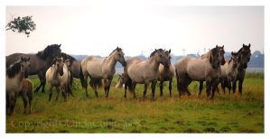 The Herd by KonikPolski