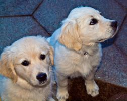 SUE'S PUPS by tibbet2000