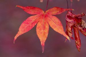 Autumn colours 6 by AngiWallace