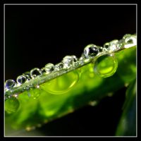 Dew Edge by evaPM