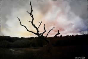 The Tree Dies Slowly by Estruda