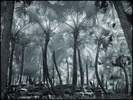 Palm Trees II infrared... by MichiLauke