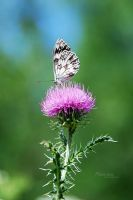 Butterfly by marialivia16