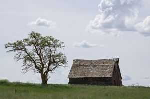 Barn and Elm Tree  by TRunna