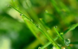 Drops on grass by Samantha-meglioli