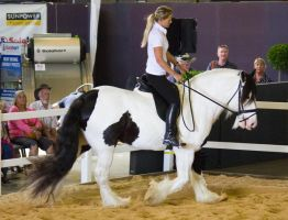 STOCK - 2014 Total Equine Expo-63 by fillyrox