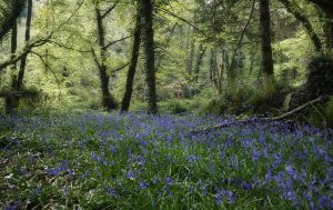 Glenbower Woods 2 by lornamacdonald