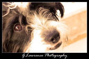 Black and white dog by glawrence