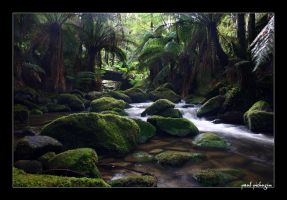 Rainforest water by paulmp