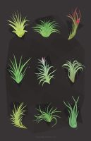 air plants by tinysnail