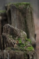 179 - Mossy mountains... by AnnaMagdalenaPe