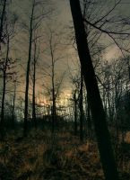 Dark Forest by mateuszskibicki1