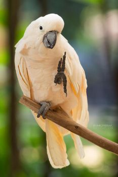 Happy Parrot Says Peace! by Unkopierbar
