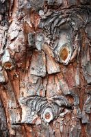 Fascinating Cypress Bark Stock by aegiandyad