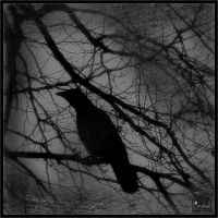 Corvus Declension II by Baron-of-Darkness