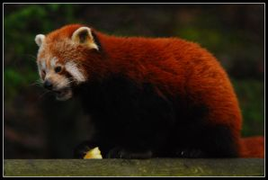 Dudley Zoo Again - III by jerry486