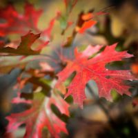 Fall Color by Nevma