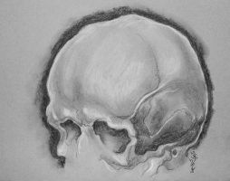 Skull study 3 by ZombieWil