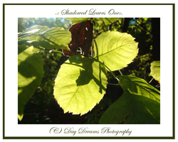 .:Shadowed Leaves One:. by DayDreamsPhotography