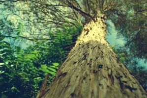 Under the Sycamore Tree by Pierrebear