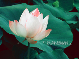 20120728 lotus-1 by BeUrThorns