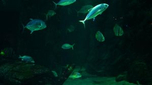 Aquatic Background 29 by ALP-Stock