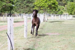 Dn black pony canter mane up by Chunga-Stock