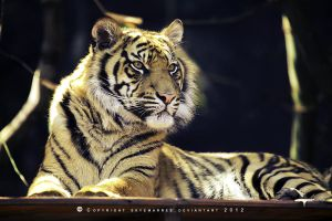 Tiger_1695 by SkyeMarree