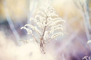 Waiting for the Snow by rebeccatengstrom