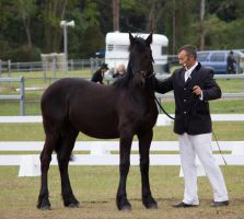 STOCK - Friesian Show 2012-52 by fillyrox