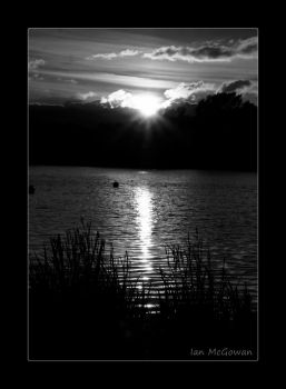 Light through the reeds . by 999999999a