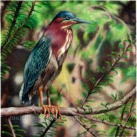 Green Heron in the Arboretum by MaleficentDraco