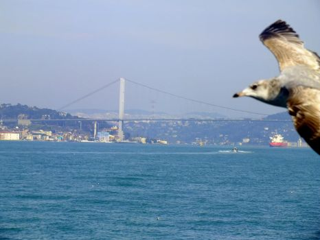 istanbul by zehracldgn