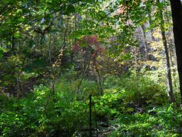 Autumn Undergrowth 22 by TornPageDyedRed