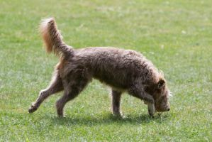Dog Mix Unknown Breed Running by LuDa-Stock