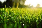 Grass by White-Knight-87